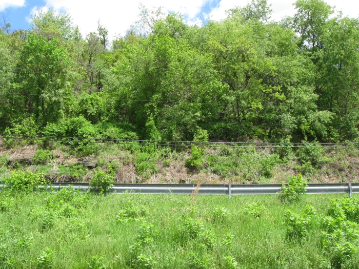 View on east side of property purchased by John Slicker.